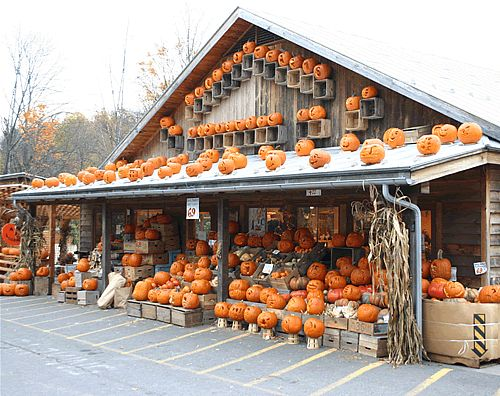 image detail for woodstocks shops sunfrost farms halloween display - Halloween Display Ideas
