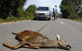 Petition · Senate: Change the Road Safety Act to hold accountable those hunting…