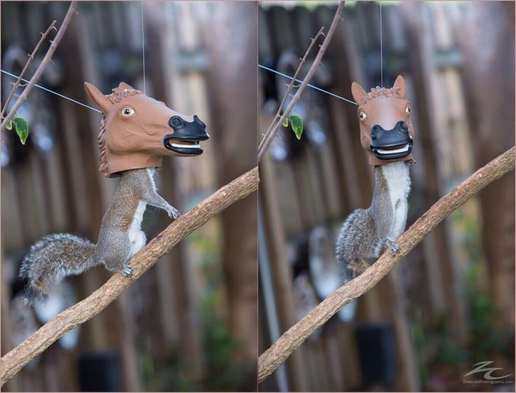 A horse head squirrel feeder. Genius! @ http://i.imgur.com/czjCVpk.jpg