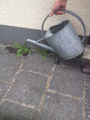 78+ Ideas Sobre Hausmittel Gegen Unkraut En Pinterest | Weed ... Tipps Pflanzenpflege Hausmittel