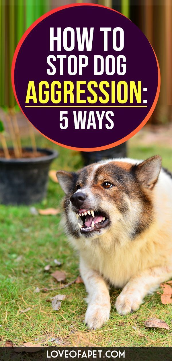 How To Stop Dog Aggression 5 Ways Dog Dogaggression