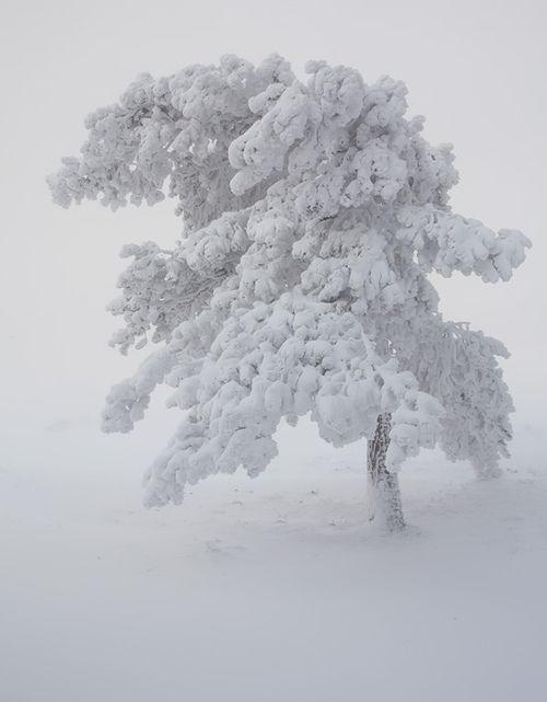 Soft focus of winter's grace.