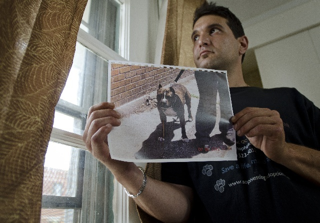 Chris Papakostas holds a photo of his pit bull, Wicca, at his home in Montreal on Tuesday, July 24, 2012 . The dog is to be put down at the Berger Blanc animal shelter after she jumped on a woman.