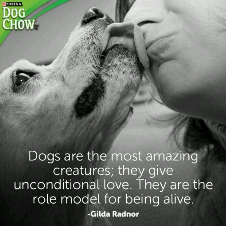 Love Animal Quotes: Dogs-- Unconditional Love.