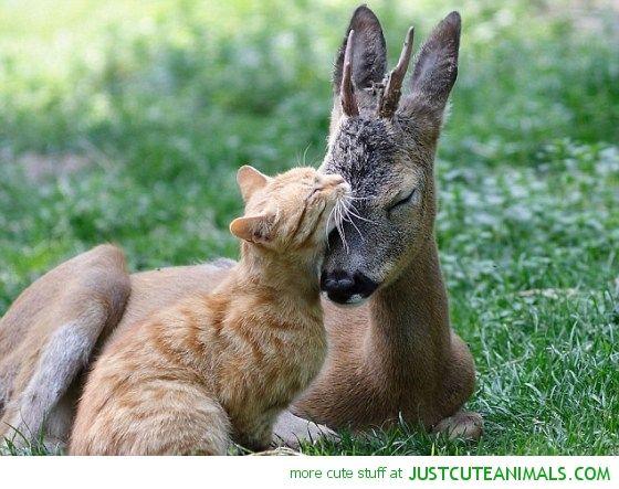 cat szarvas hozzábújva átölelve szarvas csikó aranyos állatok vad vadon élő fajok a Föld bolygó természet képek Képek FOTÓK képek