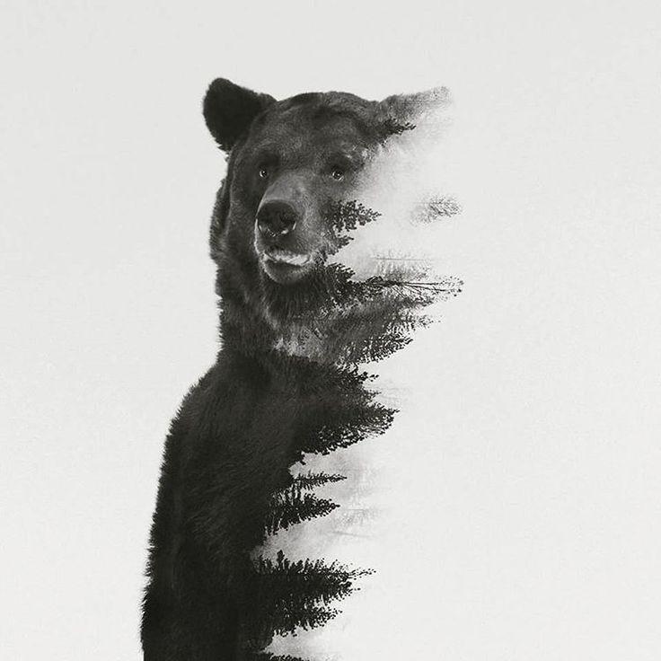 #andreaslie #bear