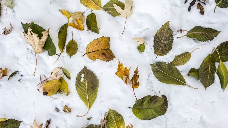 https://flic.kr/p/21so9K3 | _DSC5667cr_16x9 | First snowfall