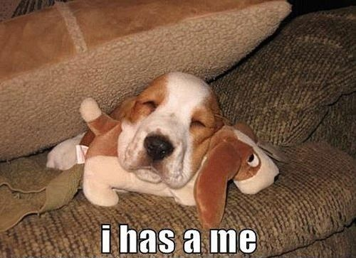puppy loveBeanie Baby, Stuff Animal, Funny Dogs, Old Dogs, Bassett Hound, Naps Time, Baby Dogs, Basset Hound, Minis Me