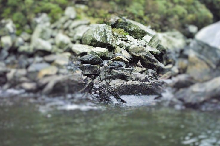 Seals at Milford Sound. Can you see them?