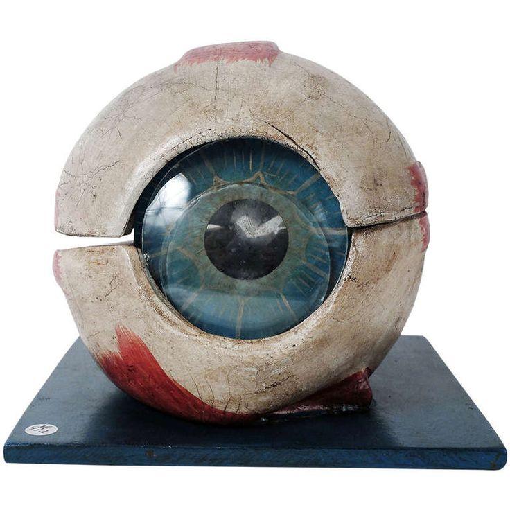 121 best Eye Anatomy images on Pinterest   Eye anatomy, Eyes and ...