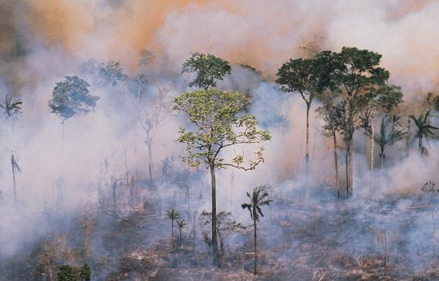 How Slash and Burn Agriculture Affects Geography: A slash and burn fire burns in the Amazon rain forest.
