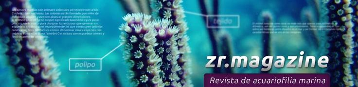 ZR Magazine