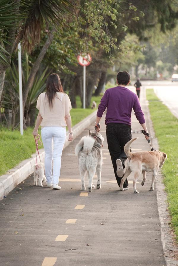 Mascotas y sesión preboda