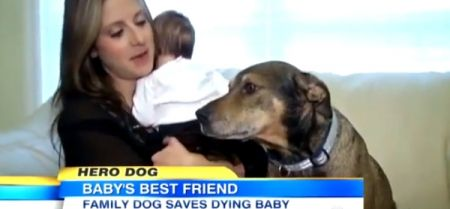 Dogs Lovers | Rescue Dog Saves Babys Life