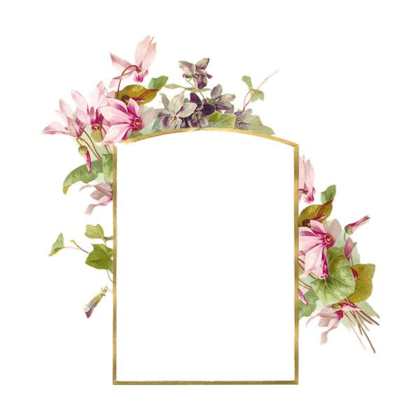 albumframe6.png ❤ liked on Polyvore featuring frames, flowers, backgrounds, fillers, cornici, borders and picture frames