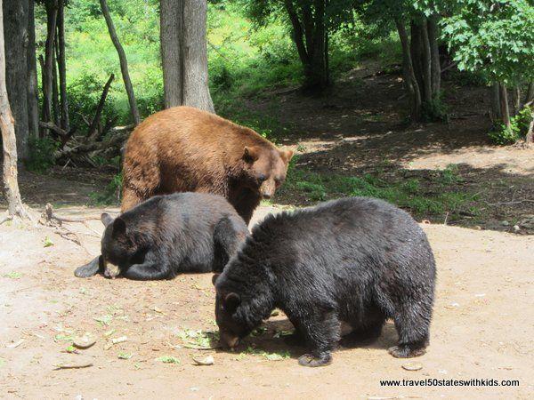 Oswald's Bear Ranch, Michigan's Upper Peninsula