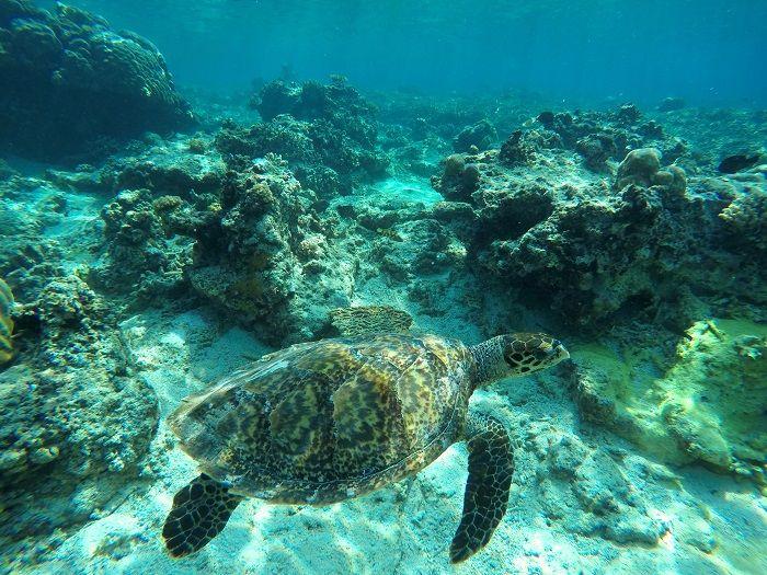 Snorkeling with turtle in Gili Meno, Indonesia