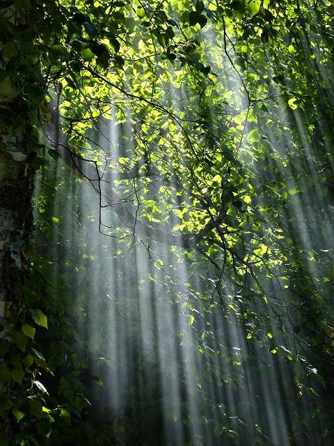 wunderschöne Natur und talentierte Fotografen inspirieren uns!