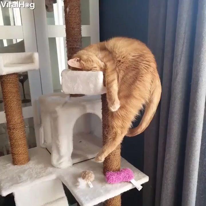 Looks Like Somebody Had Too Much Catnip 😺😴🍀