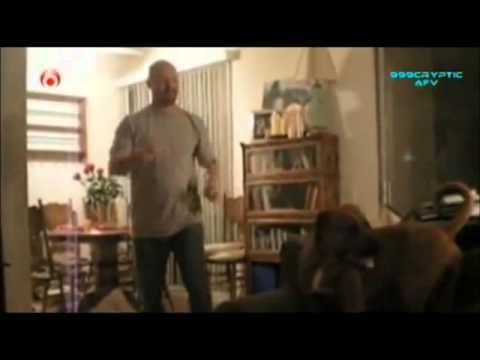 Funny Dogs Video Clips - Part 2