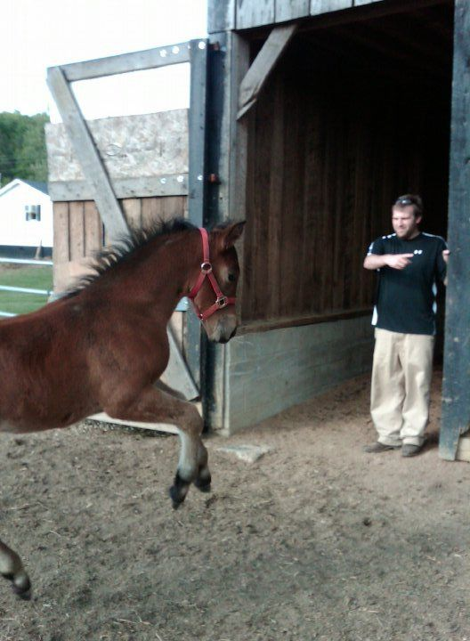 Long Term Rehab | Residential Treatment Center | Kentucky Rehab | EAGALA model equine therapy | horsemanship
