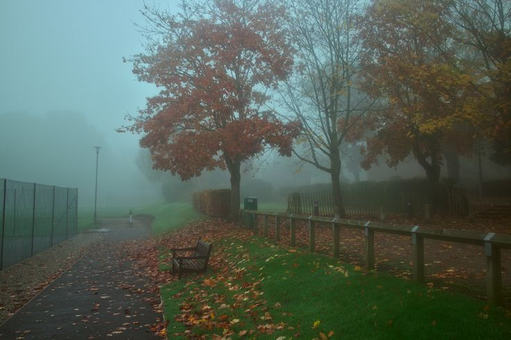 Last of the fall - Repton School grounds in Derbyshire