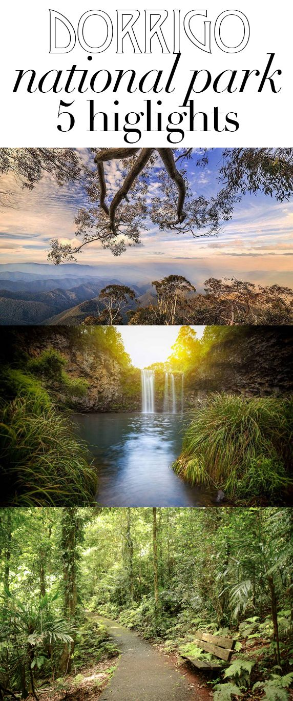 Dorrigo National Park in NSW, Australia is a hidden gem. My 5 highlights with photos that will make you want to go there right now!