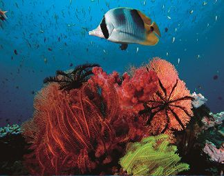 Snorkelling Port Douglas Australia Poseidon Cruises