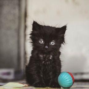 Copyright On The Ball Photography - rescue photos