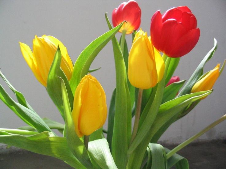 stelian ilie flower 1