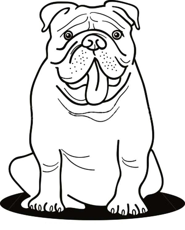 baby bulldogs coloring pages - photo#9
