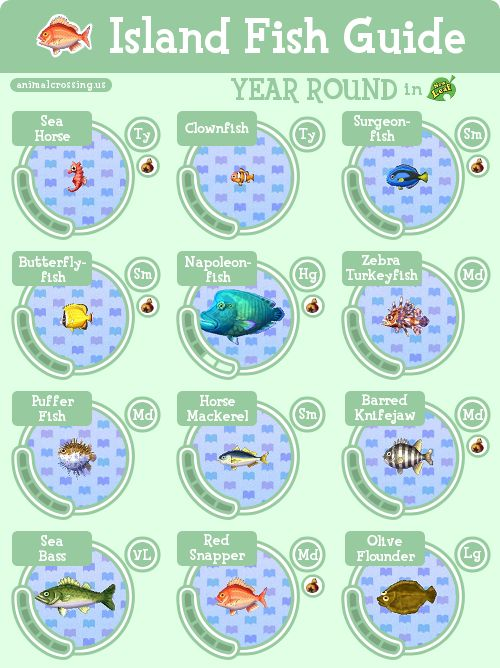 Animal Crossing New Leaf Island Bug Guide