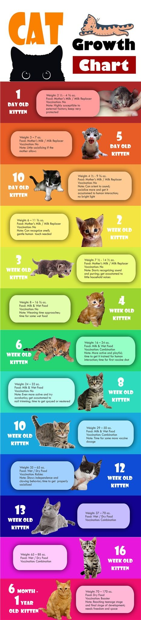 [Infographic] Kitten Cat Growth Chart by Age, Weight and Food Source: http://best1x.com/kitten-cat-growth-chart/