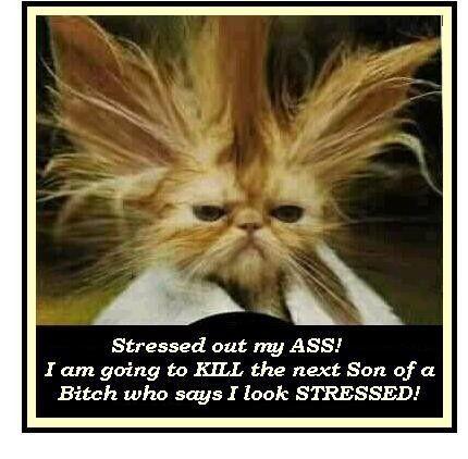 68b813d0608832e12d0fb21ce11ad22d--funny-cats-funny-animals.jpg