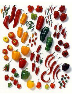 ajies1 Cultivo del pimiento, chile, ají, morrón (Ficha)