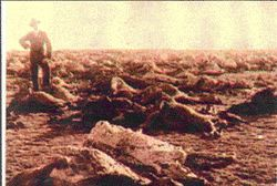 Kitcheners SCORCHED EARTH POLICY - Over 3.6 million Boer sheep were slaughtered as part of the much reviled Scorched Earth Policy