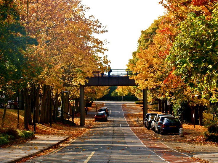 Oh yes. Autumn was the loveliest time on campus. (University of Warwick, Warwick Uni)