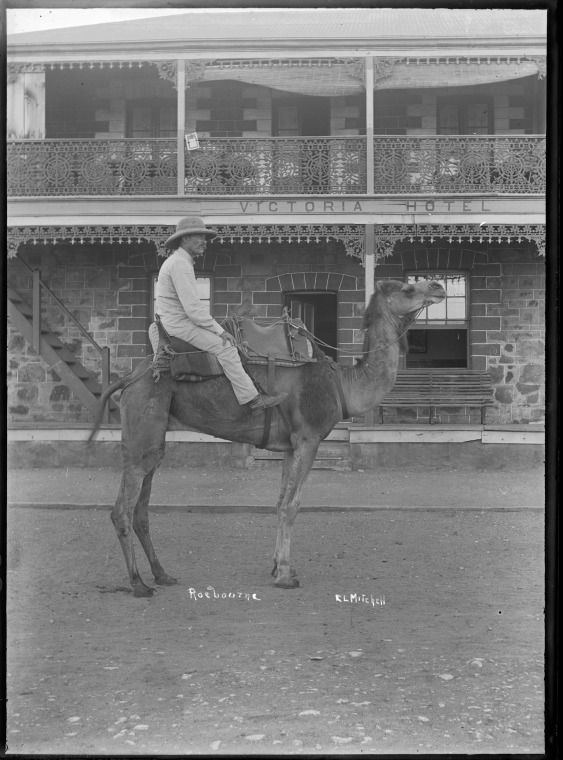 008289PD: E. L. Mitchell on a camel in front of the Victoria Hotel, Roebourne, 1909 https://encore.slwa.wa.gov.au/iii/encore/record/C__Rb4242915