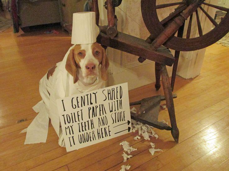maymo paper shredder i dogs pinterest