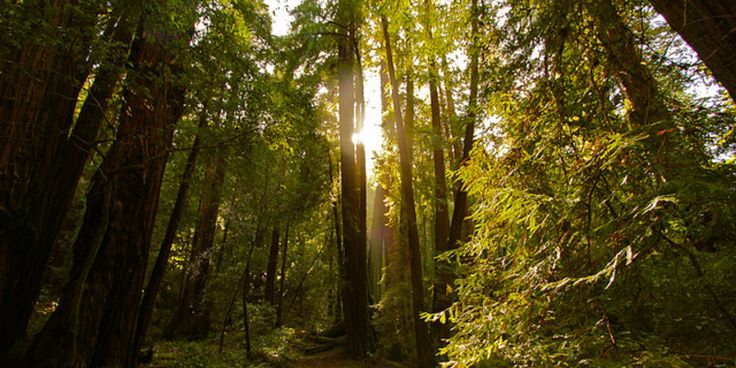 The top reasons why you should visit Muir Woods National Monument #travel #roadtrips #roadtrippers