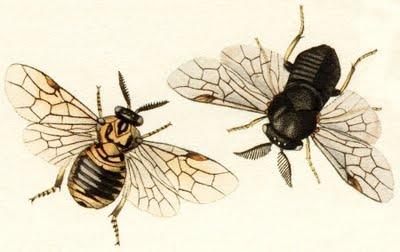 John Curtis (1830's). The Conifer Sawfly, British Entomology.: シーナ, Dark Forests