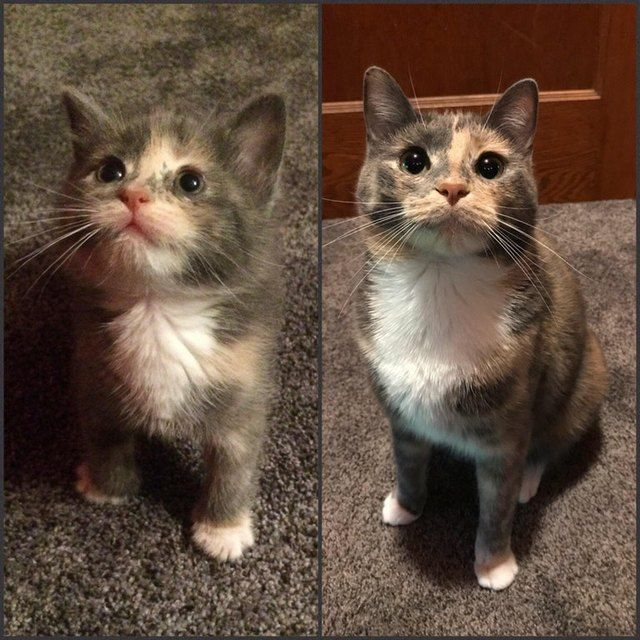 25 Before And After Photos Of Kittens All Grown Up Kittens Cute