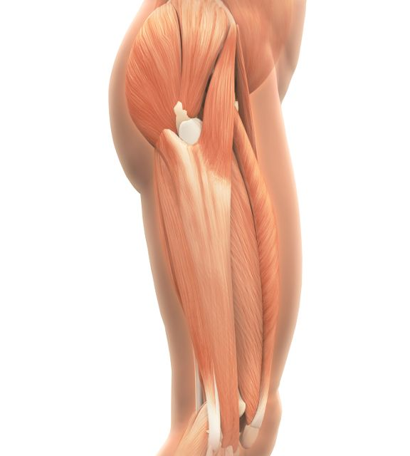 Upper Thigh Something To Think About: 11 Best Images About Hip Pain On Pinterest