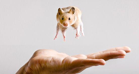 :)Animal Pics, Cute Animal, Animal Pictures, Tiny Animal, Baby Animal, Funny Animal, Little Animal, Adorable Animal, Cutest Animal