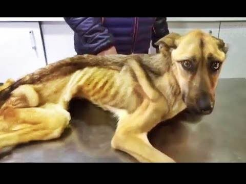 Inspiring Animal Rescue - Animal Rescues Before and After (2016)【Best Video Of The Year】 - YouTube