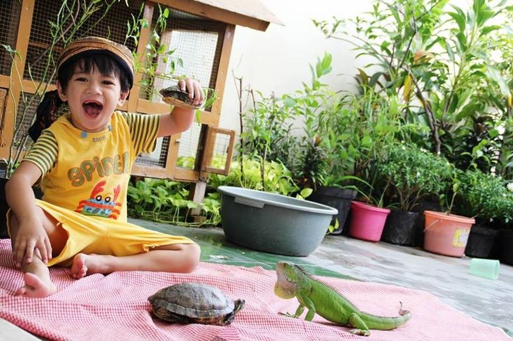 Foto kiriman Rika Oktavianti  Dirumah aku memelihara binatang Kura-kura dan iguana .. mereka akur satu sama lain , dan anakku Nabeel sangat senang jika bermain bersama kura2 dan iguana , kami menjaganya dan merawatnya dengan baik, memberikan makanan dan tempat yg layak untuknya, dan sekarang kura-kura dan iguana menjadi teman baik anakku smile emotikon #AnimalLoversEMCO