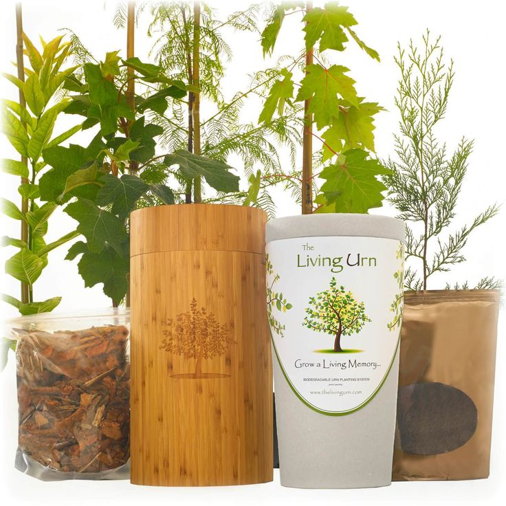 Living Memorial Tree with Biodegradable Burial Urn