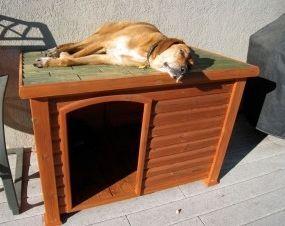 Casetas para perros, ¿cómo deben ser? | EROSKI CONSUMER