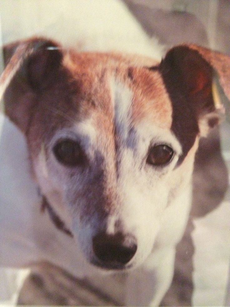 Friendships lasting 17 years don't happen everyday. There is no other creature in the world that is more loving and loyal than a dog. My dog Milo was one such example.