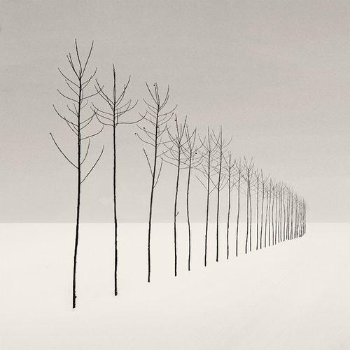 Simple perspective - meidän koulun pihapuut!